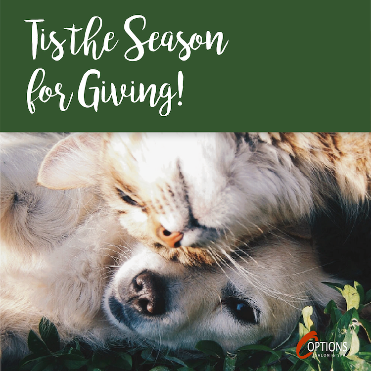 Season for Giving Cat & Dog
